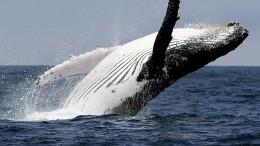 Walforschung per Drohne