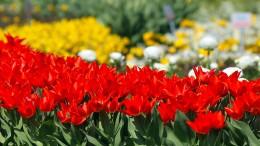 Kunst aus Blumen in Girona