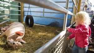 Die Kinder und das liebe Vieh