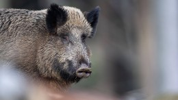 Wildschwein sorgt in Kaufhaus für Polizeieinsatz