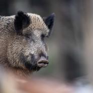 Das Tier wurde zuletzt in der Nähe eines Waldstücks gesehen. (Symbolbild)