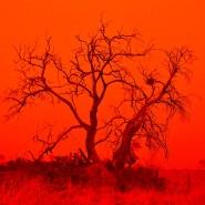 Buschfeuer in Australien: Die Menschheit wird sich mit solchen Ereignissen zunehmend arrangieren müssen.