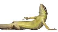 Kommen bald die Krokodile?