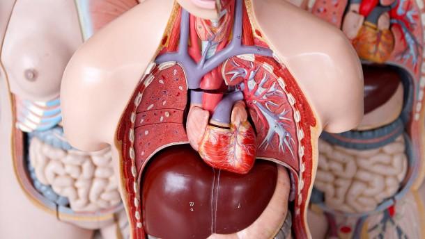 Organe spenden leichtgemacht