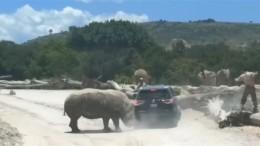 Wenn das Nashorn einmal schiebt