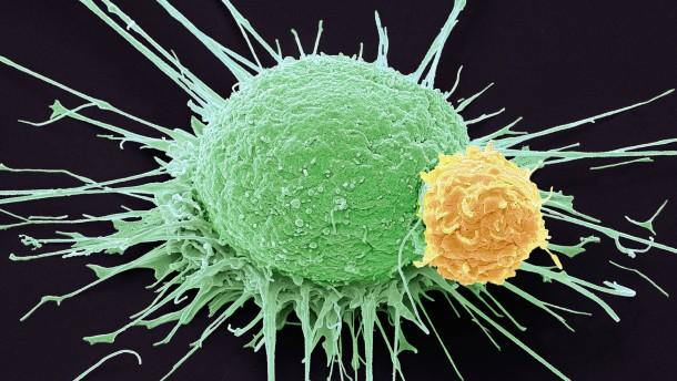 Die Selbstverteidigung gegen den Krebs