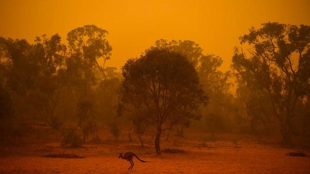 Zahl der Todesopfer bei Buschbränden steigt weiter