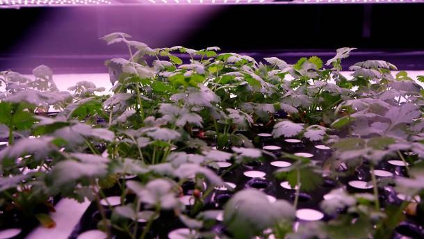 """""""Vertical Farming"""" in Dänemark"""