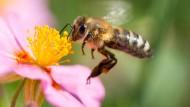 Schuld am Insektensterben ist vor allem der landwirtschaftliche Strukturwandel.