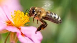 Insektensterben als Medienhysterie?