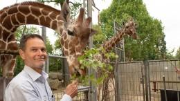 Afrika-Halle statt Giraffengehege