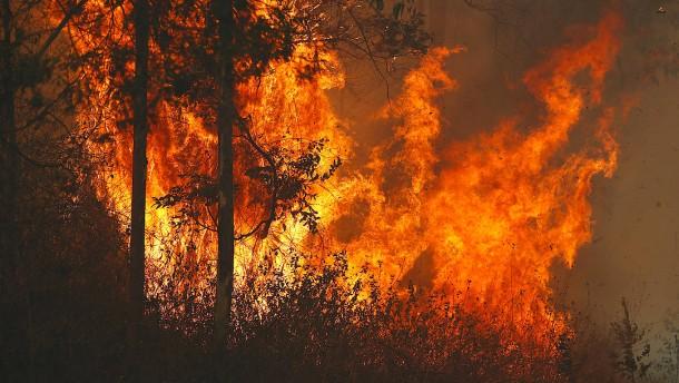 Warum brannte Australien?