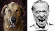 Fotograf Dan Bannino portätiert Hunde als Schriftsteller