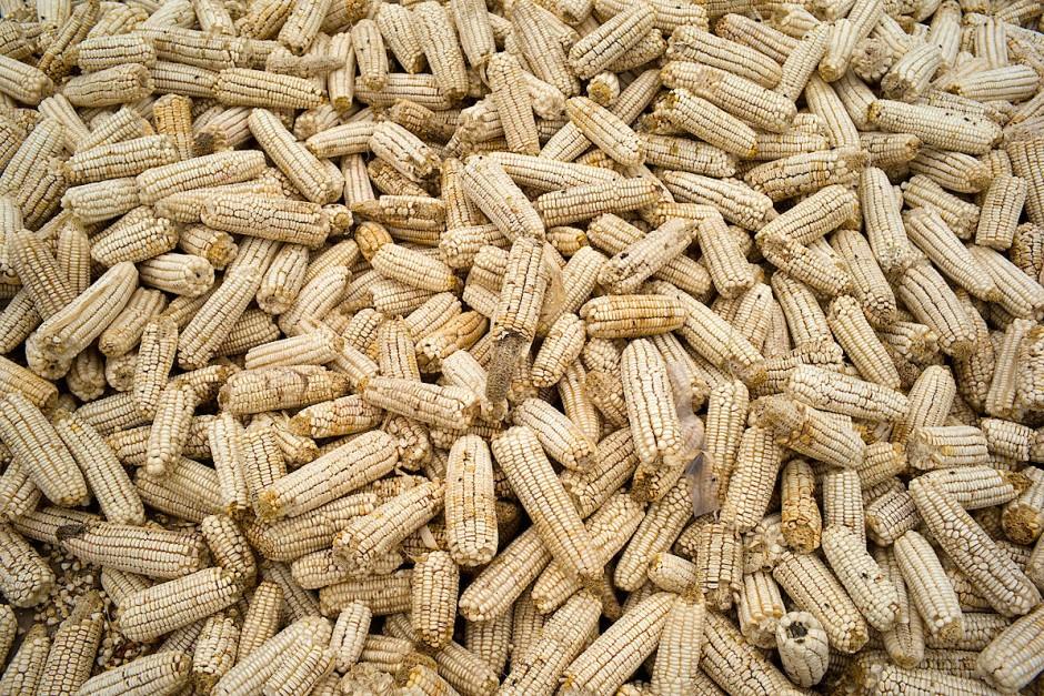 Ein Berg von Maiskolben auf dem Markt in der sambischen Stadt Kasama.