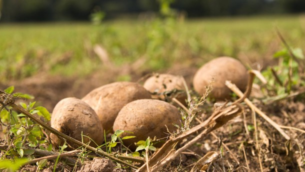 Kartoffel vom zweiten Stock