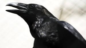 Vögel mit menschlichen Zügen
