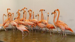 Wenn Flamingos fliehen