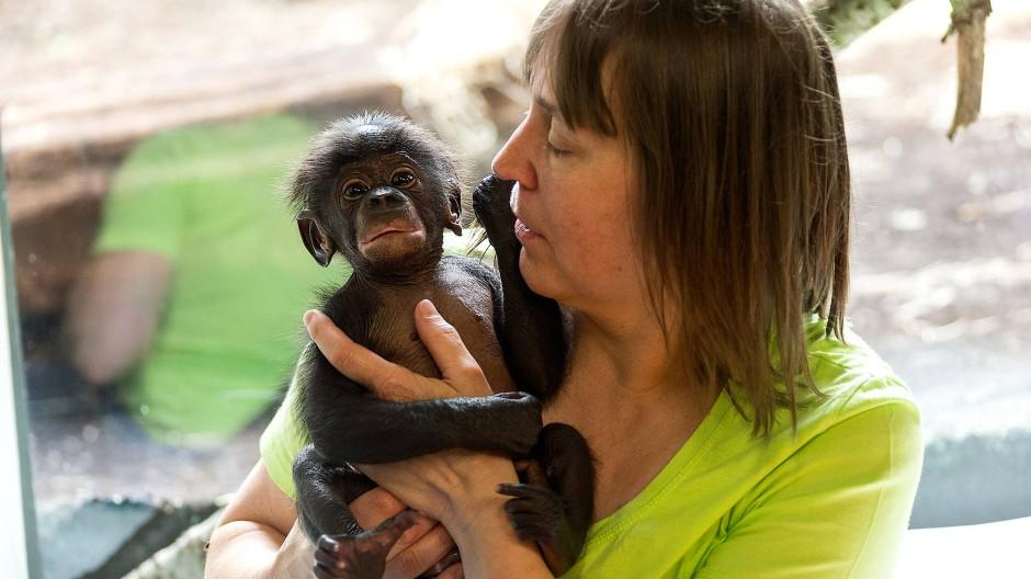 Vertrauensverhältnis: Bonobo-Baby Yango mit seiner Ziehmutter Andrea Knott.