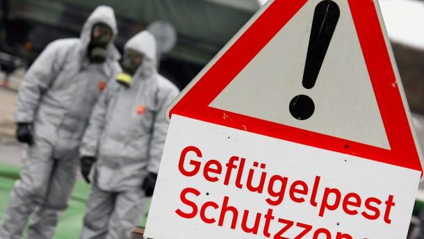 Erster Fall von Vogelgrippe in sächsischem Zuchtbetrieb bestätigt