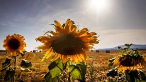 Deutschland mit am stärksten von Klimaschäden betroffen