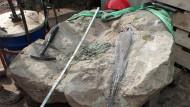 Der Knochen im tonnenschweren Stein, der ihn über Hunderte Millionen Jahre konserviert hat