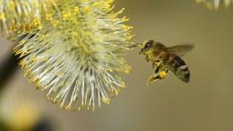 Das Bienensterben