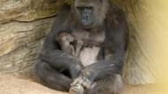 Spaziergang mit Gorilla-Baby