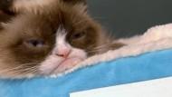 Grimmige Katze Grumpy Cat stellt zweites Buch vor
