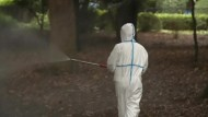 Denguefieber-Ausbruch macht Japanern Angst