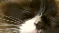 Hauskäufer lässt sich Katze 140.000 Dollar kosten
