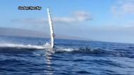 Wal rammt Touristenboot