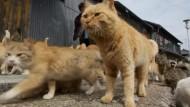 Japans Katzeninsel Aoshima