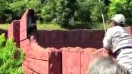 Malaienbär misslingt Flucht aus Zoo
