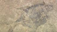 Evolutions-Zweifler findet sehr altes Fossil