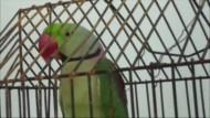 Polizei verhaftet Papagei wegen Beleidigung