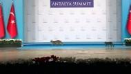 Streunende Katzen auf G-20-Gipfel