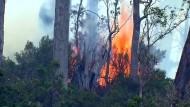 Buschbrände in Tasmanien