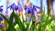 Frühlingswetter am Wochenende für Deutschland