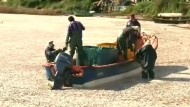 Rätselhaftes Fischsterben: Tausende Tonnen toter Tiere