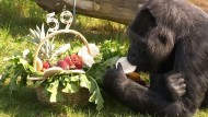 Berliner Gorilla-Dame Fatou feiert 59. Geburtstag