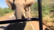 Schwarzenegger vs. Elefant