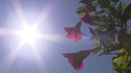 Sommer-Intermezzo mit bis zu 36 Grad