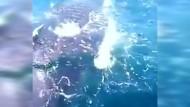 Fischer retten jungen Wal