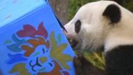 Eistorte für einen Panda