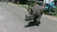 Nashorn auf Abwegen