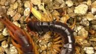 Krankheiten mit Skorpiongift bekämpfen
