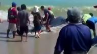 Walhai in Peru gestrandet