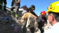 Hund nach zehn Tagen unter Erdbeben-Trümmern gerettet
