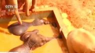 Elefanten nach zwei Tagen aus Schlamm befreit
