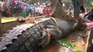 Wildhüter retten riesiges Krokodil